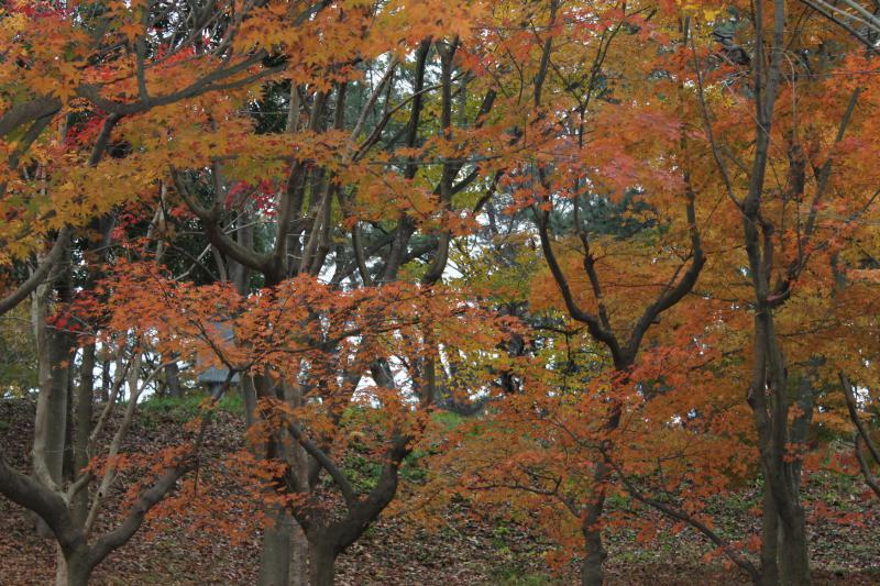 今日の飯森山公園。すっかり晩秋の装いです