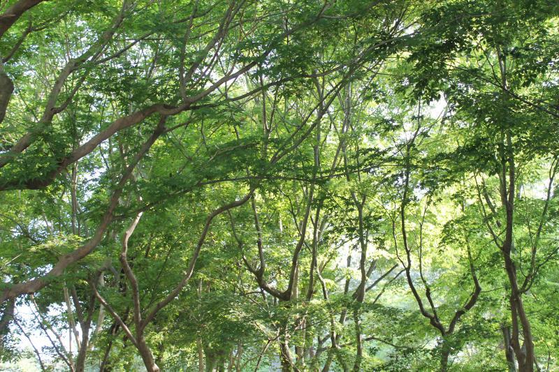 あっついですね。飯森山公園も蝉の大合唱。